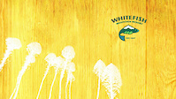 Whitefish Bike Park - Kashmir