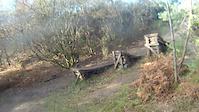 Tavi Woodlands