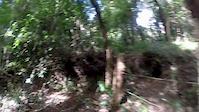 Dinosaurios - El bosque - Ninos