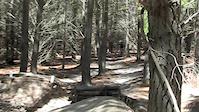 Tuggeranong Pines