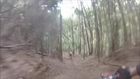morangos & sobreiros trails