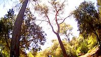 Bosque encantado - Bunyola