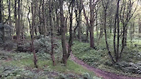 Bluebell wood gap