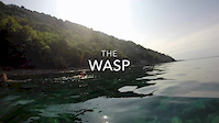 Wasp boys in Europa