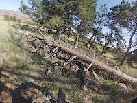 Bobcat Ridge 9 / 6 / 14  #2