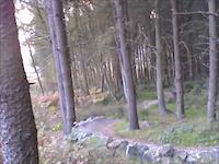 Stainburn Forest