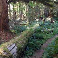 Lewis River Trail log ride