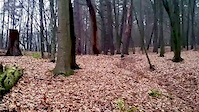 Warmia Trails