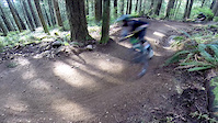 riding bear DH