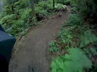 New Finn Hill Trails