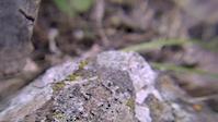 Rustlers ridge