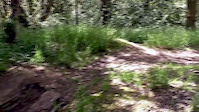 DB Woods DH Track