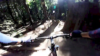 Upper C Buster Trail Mount Seymour July 2015