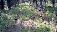Jocko Trail #34