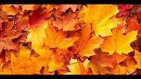 Autumn Edit/ #DeepRide