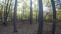 Ebenwieser Wald und Ebenwies
