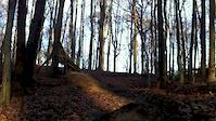 Las Bukowy 1