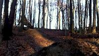 Las Bukowy 2
