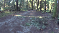 Stanley Park  - Trail