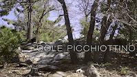 Cole Picchiottino - LOCALS - Eps 6