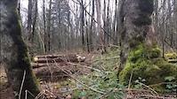 Short Cutz (Through the Forest that Smellz)
