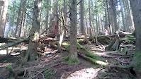 Steep wood roll