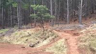 Majura Pines