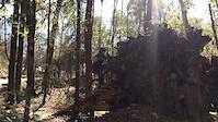 Trail Riding in Florida - Lysa Vega