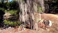 Stromlo 2016 freeduro