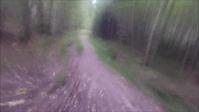Exploring Prestegårskogen