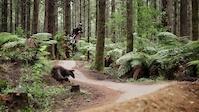 Matt Walker - Redwood Flow