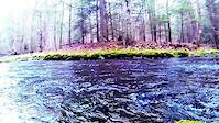 Spring Creek Trailing
