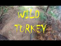 WILD TURKEY.