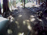 Tiger Mountain Summit Trail