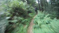 a fast Schauinsland trail | germany