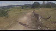 Australian Trail hazards - very Australian
