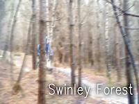 Swinley Forest 2015 New Years Edit
