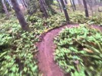 Little Larch Mountain Trail 4-5-14 in the wet....