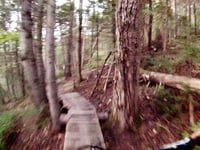 Bighorn video