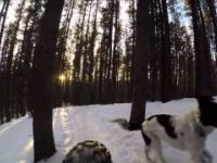 Fat Biking with Minxy the Traildog