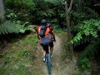 Corners: MTB trail in Whaka Forest, Rotorua,...