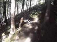 Squamish XC Files - Made in the Shade