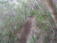 Ma'akua Ridge Trail