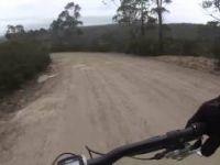 Ewok Forest trail