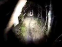 Nichols Creek, Dunedin - Night run