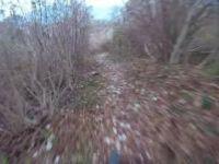 Sentiero in località Cortés - Alano di Piave