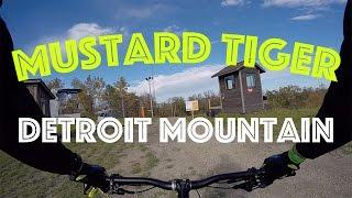 Detroit Mountain - Mustard Tiger | October 2016