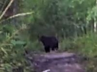 Bear Scare on Moonrakers in Golden BC