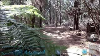 Riverhead - Low Moto trail