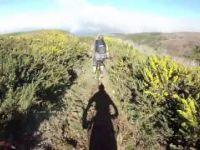 Vacas - Madeira | LINES